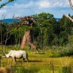 Dans la savane zurichoise, les animaux se côtoient dans un décor réaliste, entouré par la lisière de la forêt. Zoo de Zurich/Goran Basic
